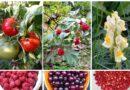 Video i fotogalerija: Zdravi jesenji plodovi iz Lever Tare