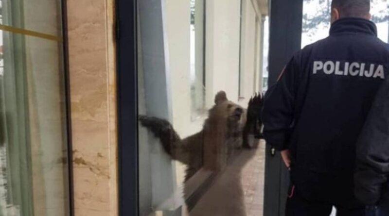OTO/VIDEO: Medved prošetao kroz Berane