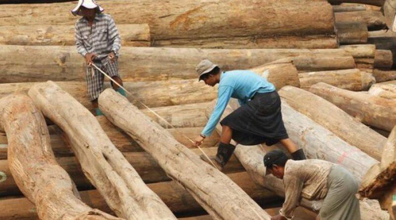 Myanmar's Dirty Timber getting into EU