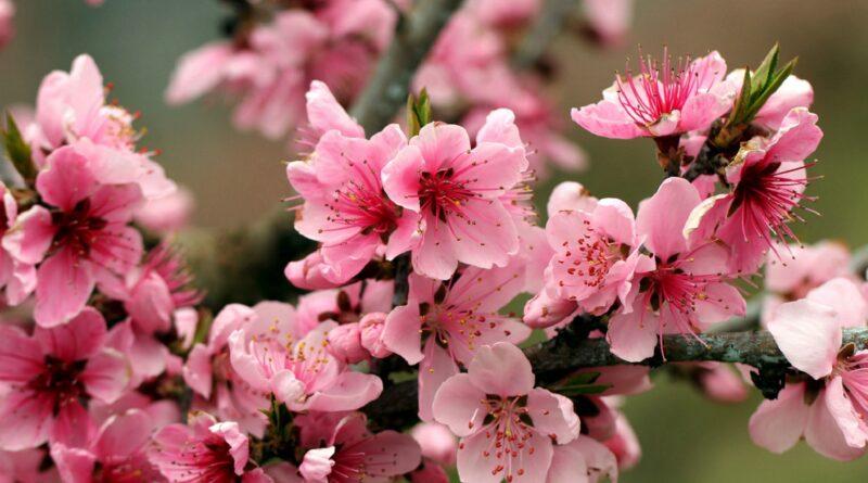Danas je prvi dan proljeća