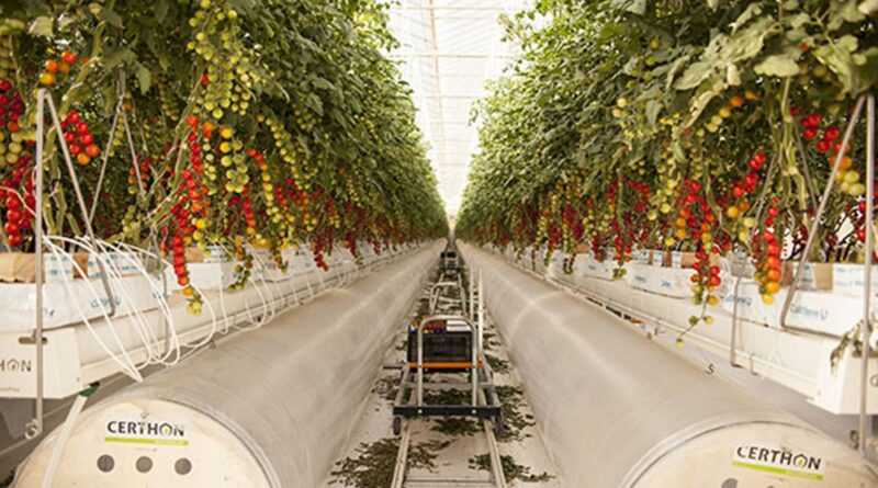 Middle East start-up that grows food within the desert raises $60 million in funding