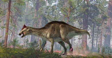 Beat-up duck-billed dinosaur had cracked tailbones and 'cauliflower' tumor
